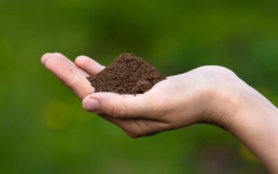 What Exactly is Soil Salinity?