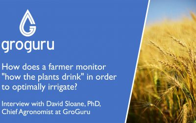 Monitoring 'How Plants Drink' in Order to Optimally Irrigate